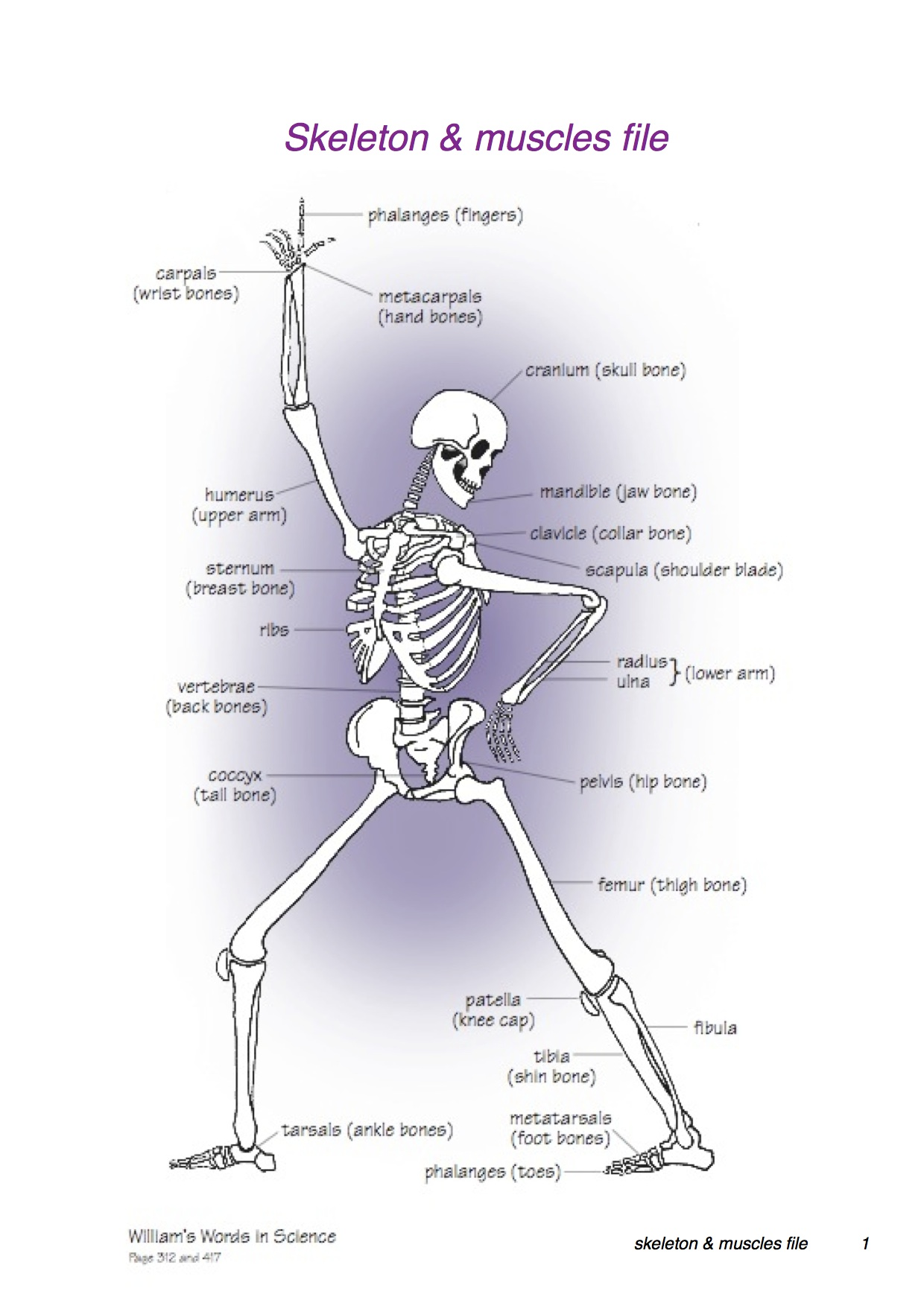 Buy Skeleton Muscles File A Triangle Of Learning Knowledge